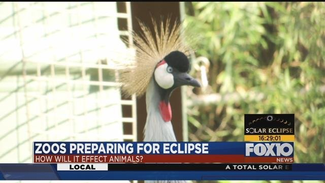 Zoo animals freak out during solar eclipse