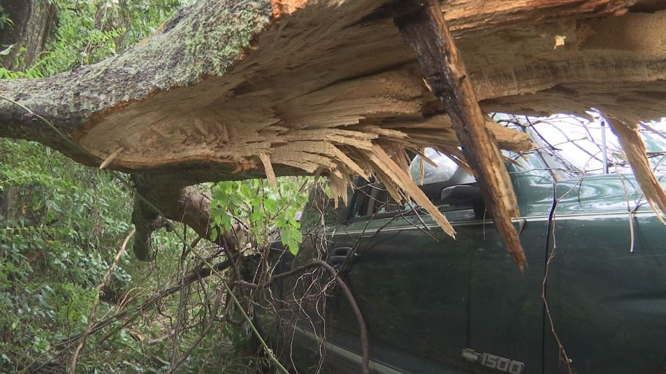 Jackson's truck was nearly smashed in half by a downed tree following Hurricane Nate (Photo: Asha Staples, Reporter)