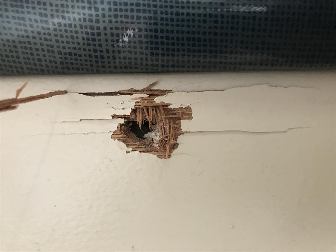 Gunshot hole in Hatch's home