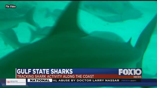 Gulf State Sharks: Exploring solutions to shark frustrations at Gulf State Park Pier. Photo: FOX10 News