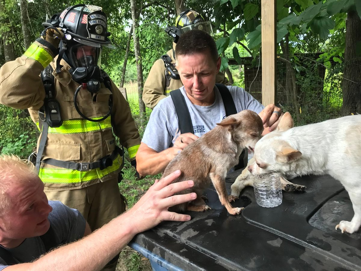 Firefighters found three dogs inside the smoke-filled home and quickly began treating them for smoke inhalation after getting them to safety (Photo courtesy WCFR)