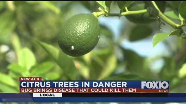 (Fox10 News)