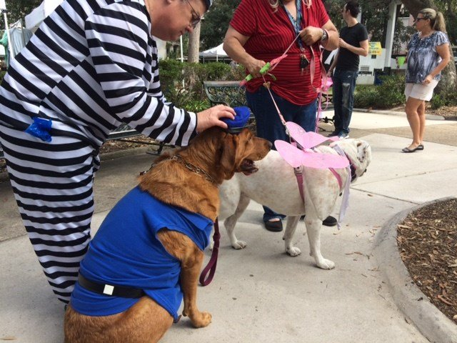 Woofstock is an annual fundraiser for ARF that includes activities, vendor booths and contests, such as the Weiner Dog Race and Doggie Costume Contest.